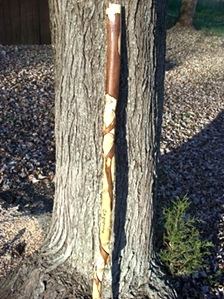 Hand Carved Walking Sticks and canes
