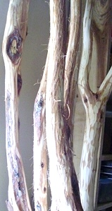 Hand Carved Diamond Willow Walking Sticks