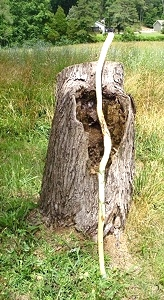 Hand Carved Walking Stick SOLD