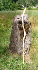 Hand Carved Walking Stick